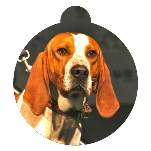 American English Coonhound Picture ID tag